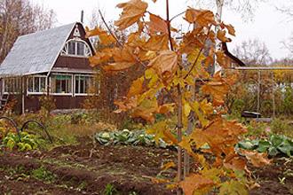 Осень – пора страховать дачи